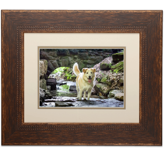 dog photography framed print