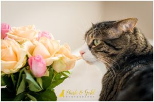 Bodie Jones - Pittsburgh Cat Photography