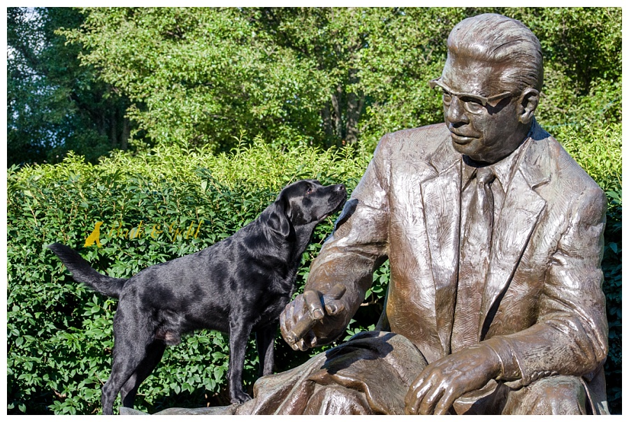 curious black Lab climbing to meet Art Rooney in statue