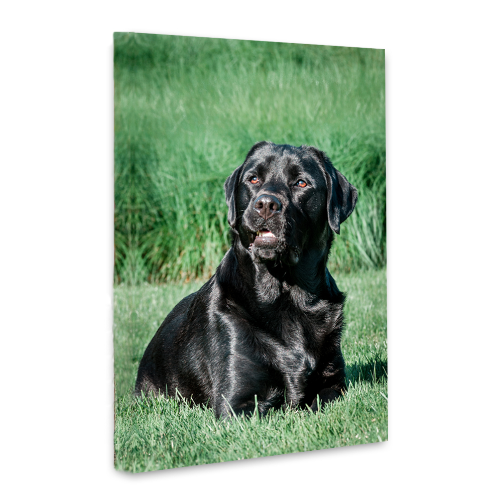 gallery-wrapped canvas of a black labrador