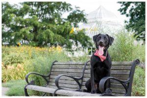 Leo the Lab's Garden Session - Schenley Park Pet Photography