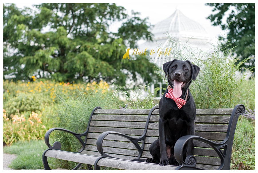 black Lab sitting on a bench outside Phipps Conservatory near Pittsburgh