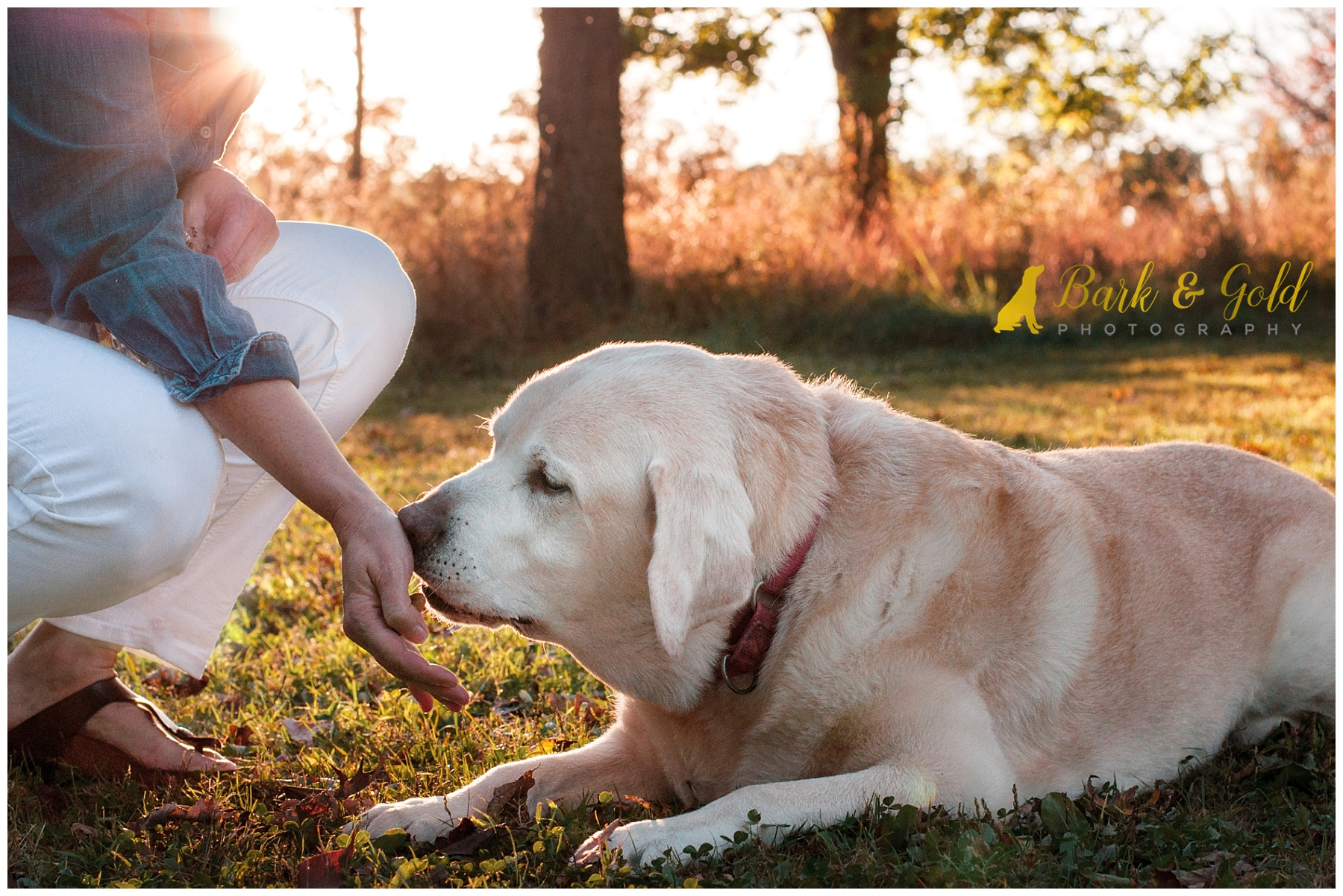 senior English Lab kisses owner's hand in South Park field