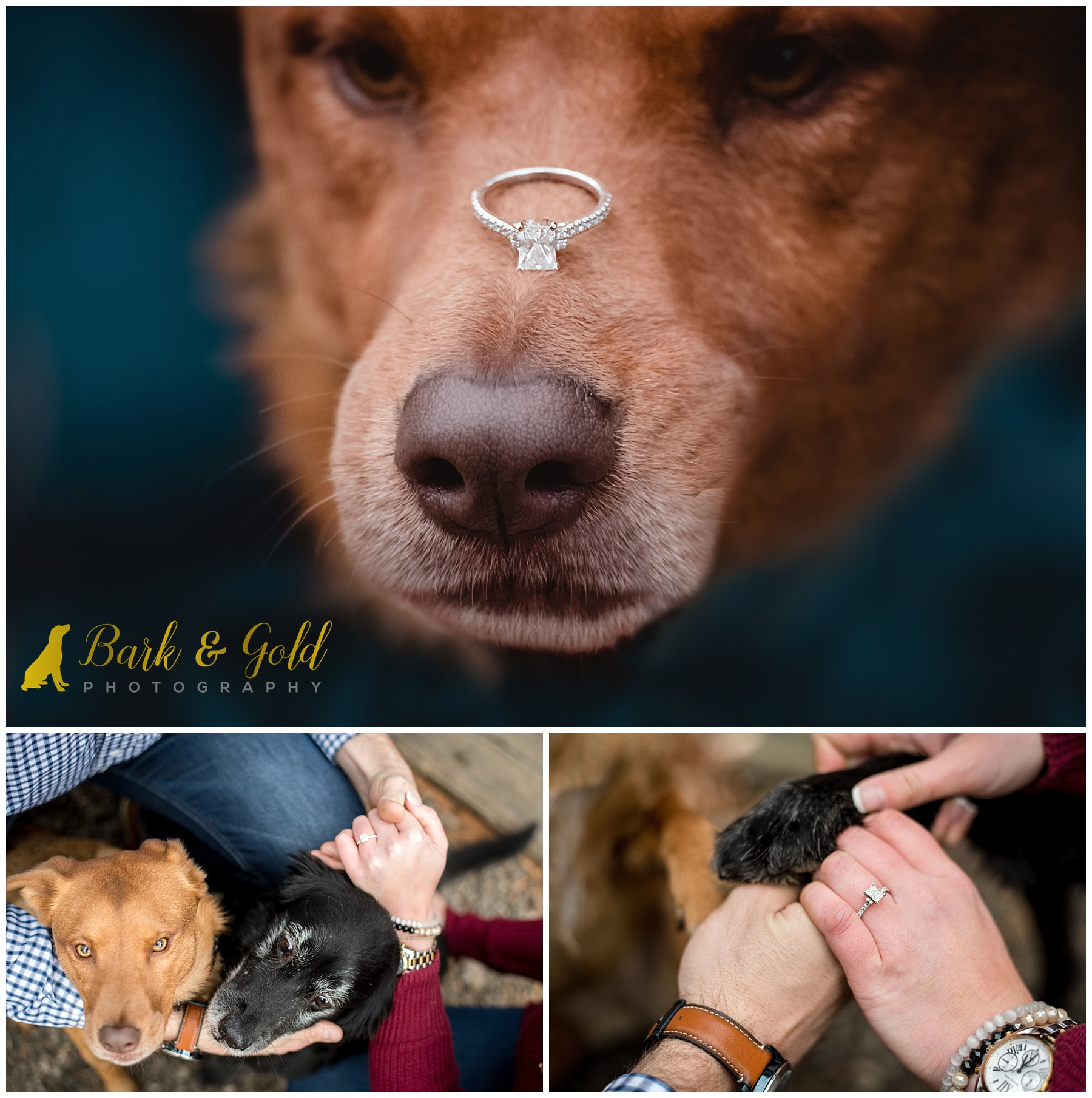 rescue dog with engagement ring on her nose