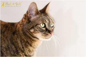 Mr. Purr, Ramone, & Tiger Lily - Pittsburgh Cat Photography