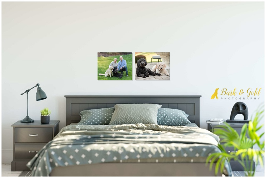 modern bedroom with two gallery-wrapped canvases of goldendoodles above bed
