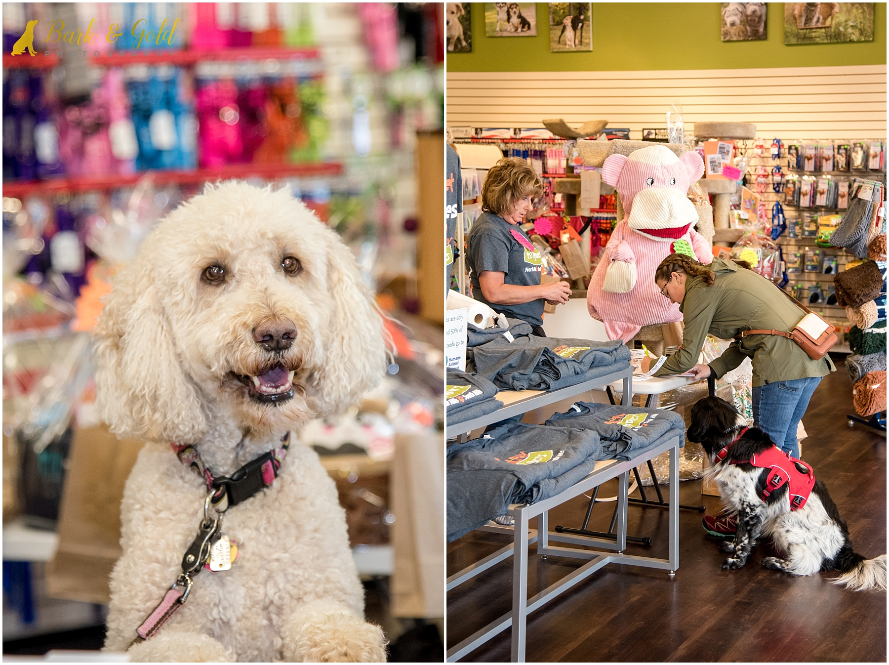 dogs shopping in Healthy Pet Products during Healthy Pet Day 2018