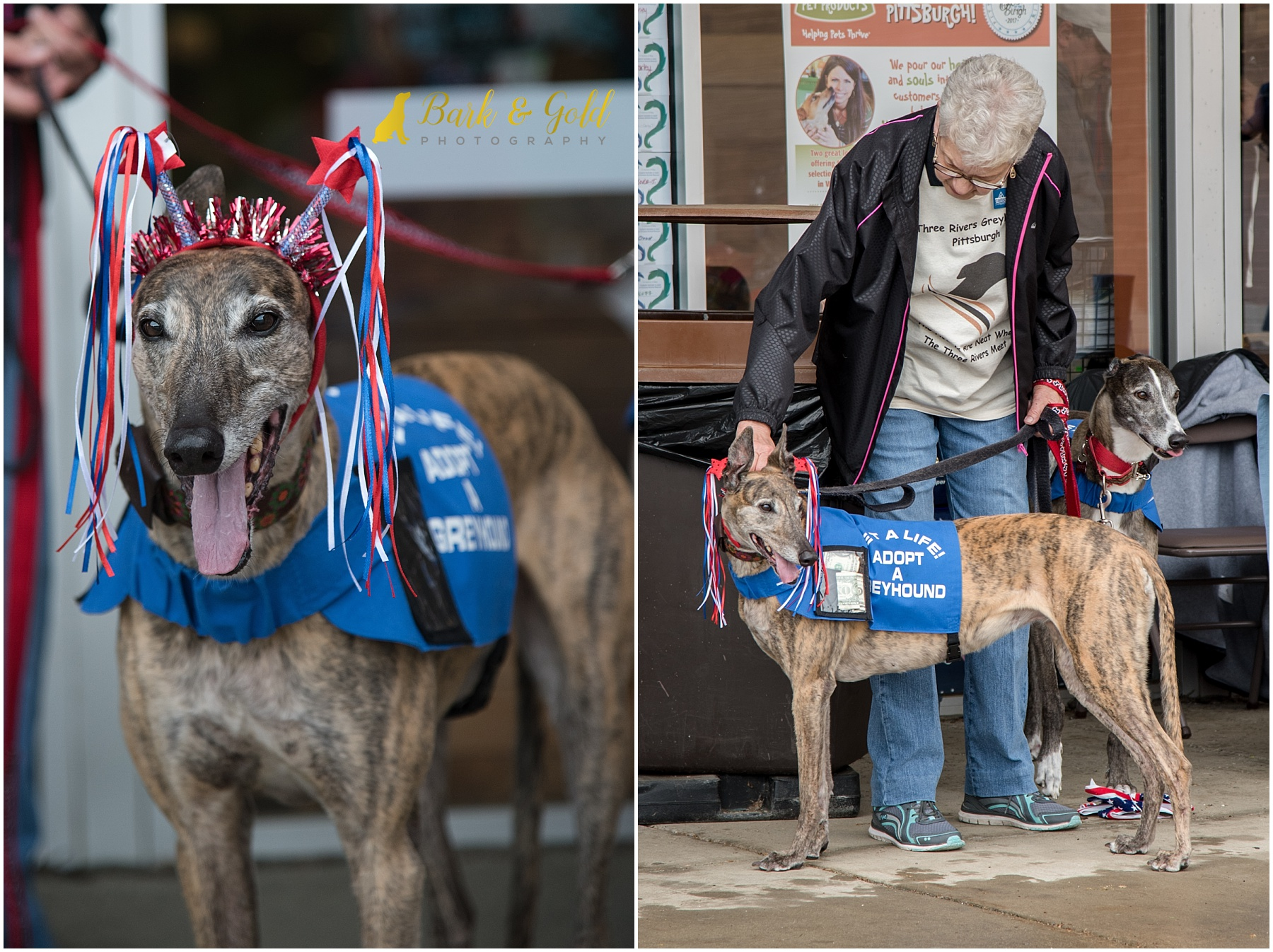 rescue greyhounds collecting donations at Healthy Pet Day 2018