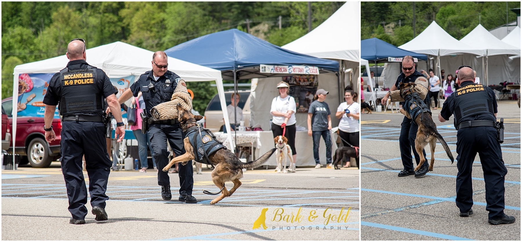 McCandless Police k9 officer performing a bite during Healthy Pet Day 2018