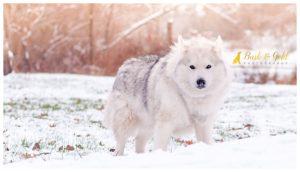 Hunter - Moon Township Pet Photography