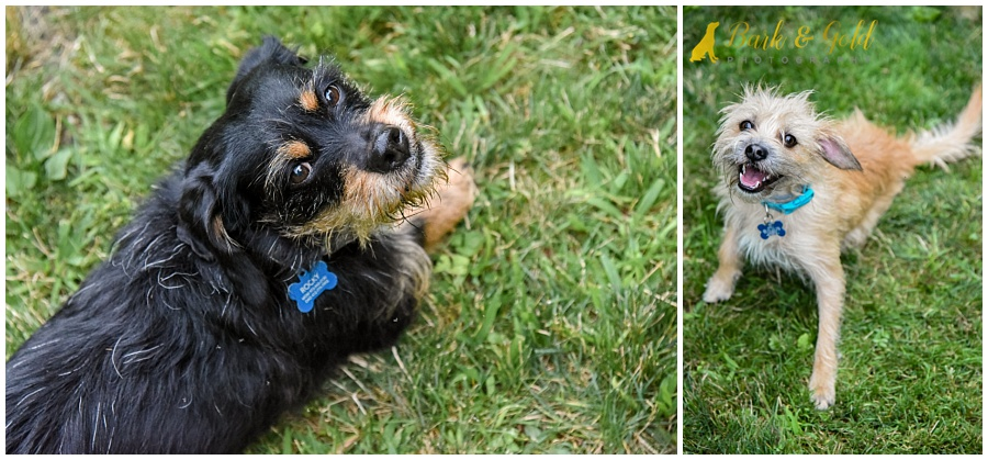 adorable rescue mutts during their backyard session in Ross Township