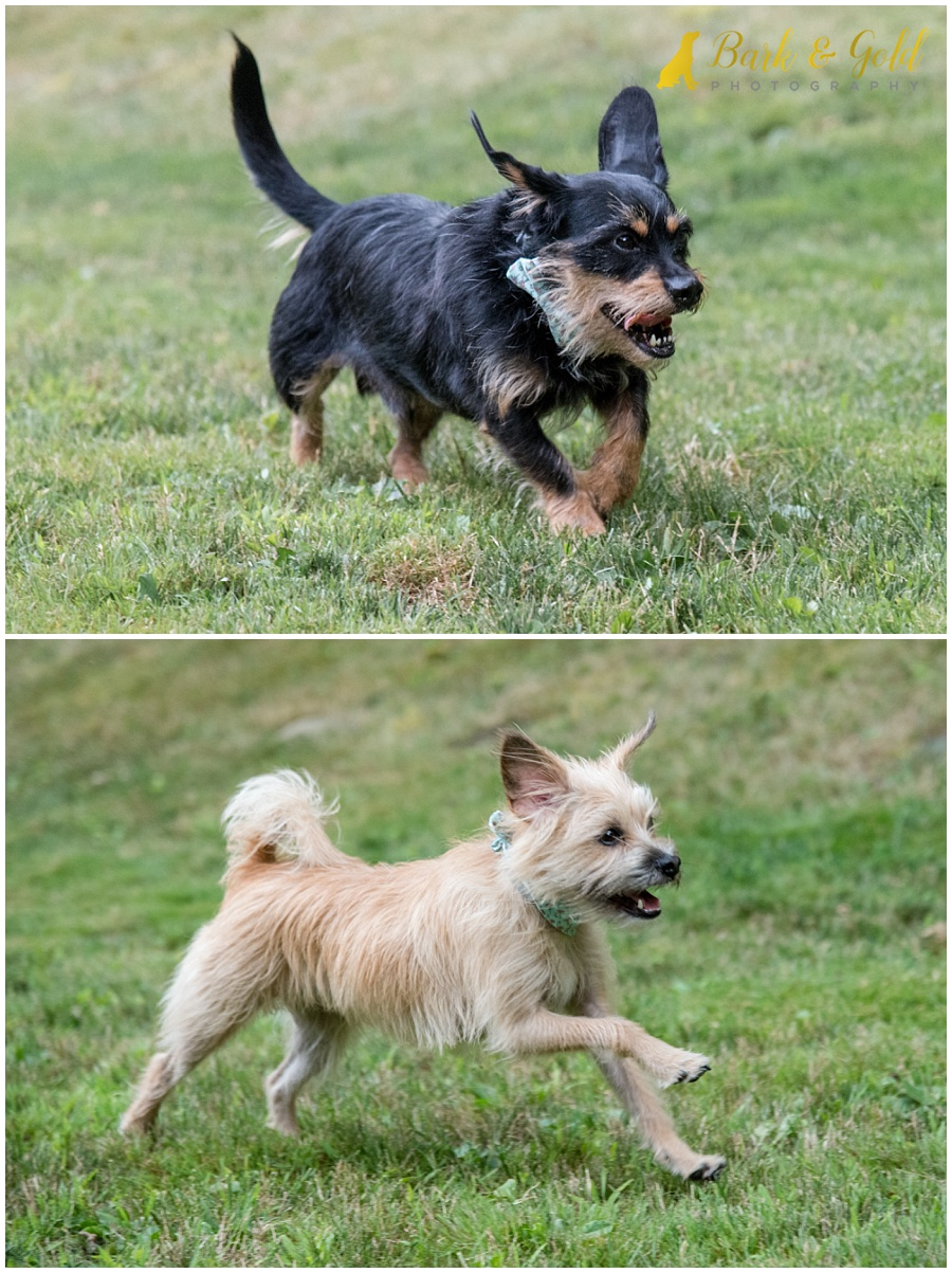 black and tan dog running in their backyard in Ross Township