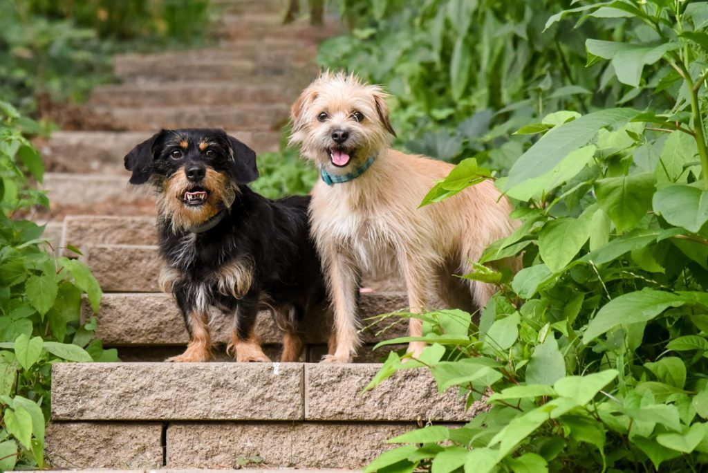 rescued mutts posing on backyard steps during a Pittsburgh pet photography session