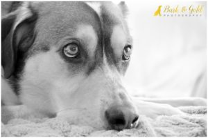 5 Reasons to Book a Professional Pet Photographer