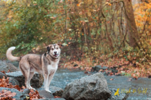 Before & After: Hunter's Creekside Leash Removal