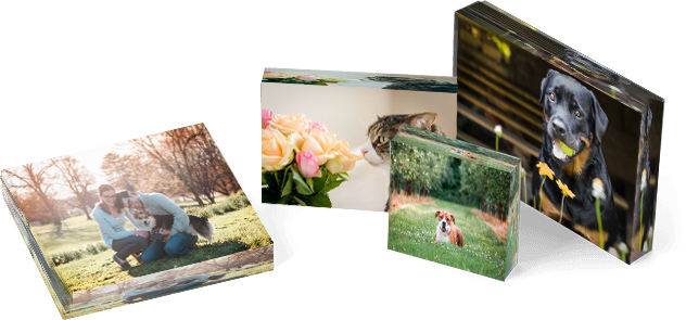 dog photography on acrylic blocks