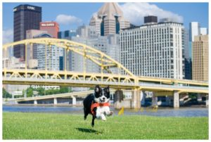 Oakley, Search and Rescue Border Collie - Pittsburgh Pet Photography