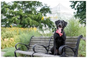 Leo the Lab's Garden Session - Schenley Park Pet Photography