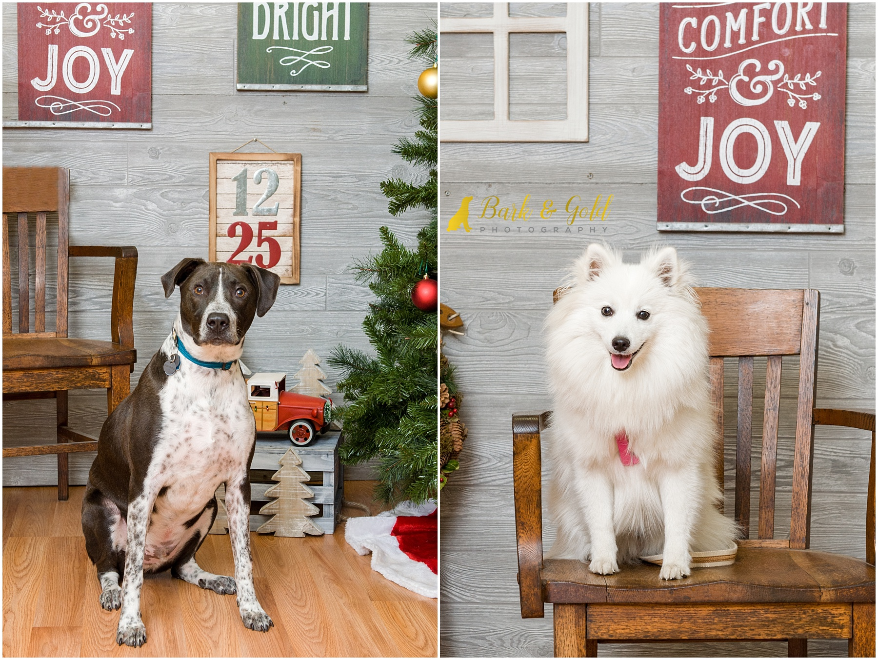 dogs sitting in a chair for 2017 pet photos with Santa at Petagogy