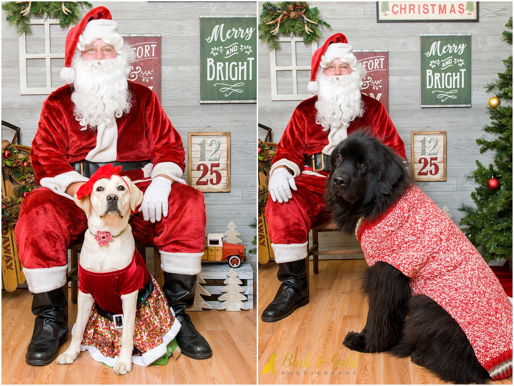 dogs wearing holiday sweaters during 2017 pet photos with Santa at Petagogy