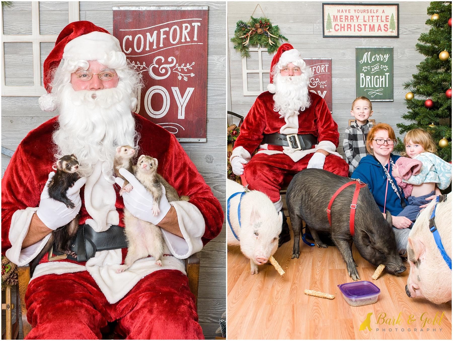 ferrets and pot-bellied pigs meeting Santa during 2017 pet photos with Santa at Petagogy