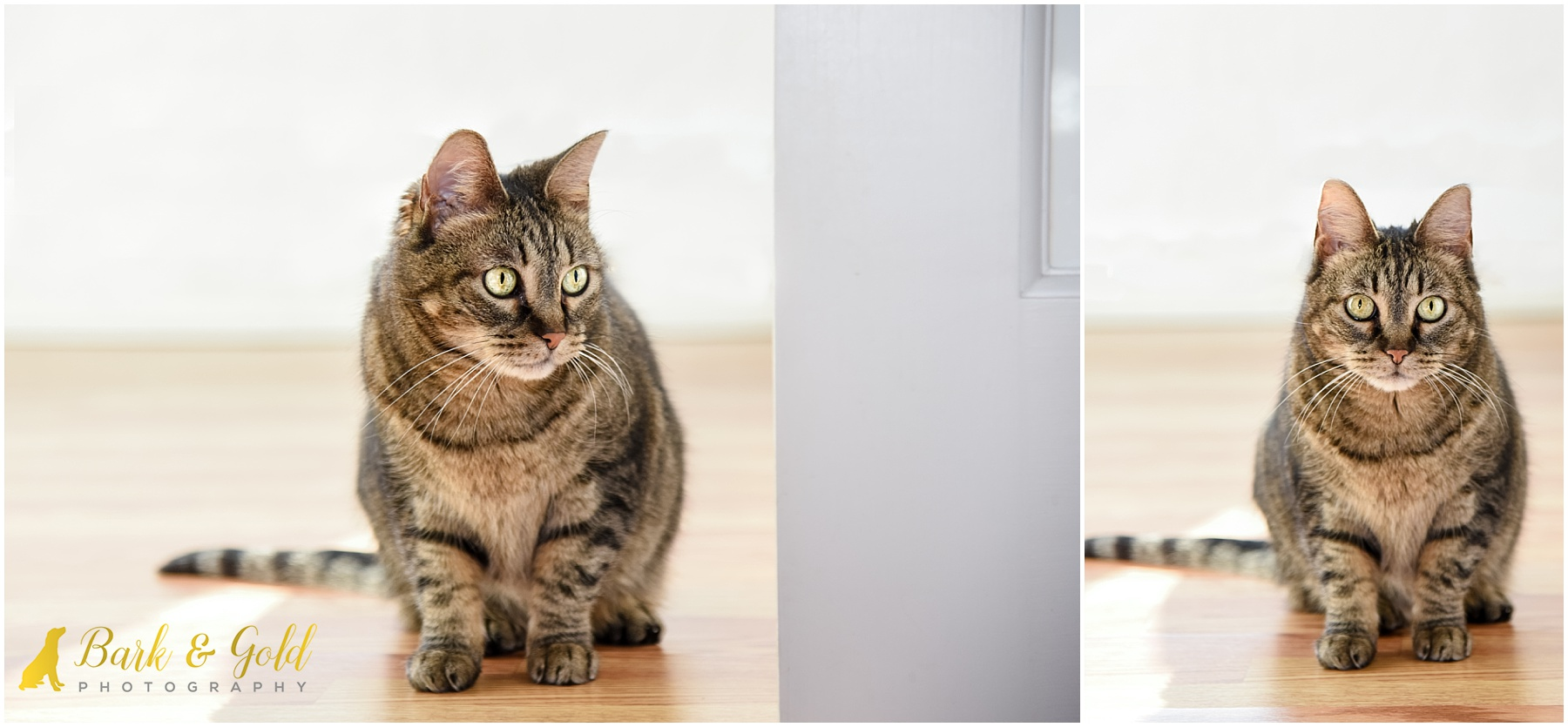brown tabby cat rests near a doorway during in-home session in the North Hills of Pittsburgh
