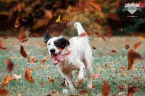 Pittsburgh Dog Photographer Places in International Photo Contest