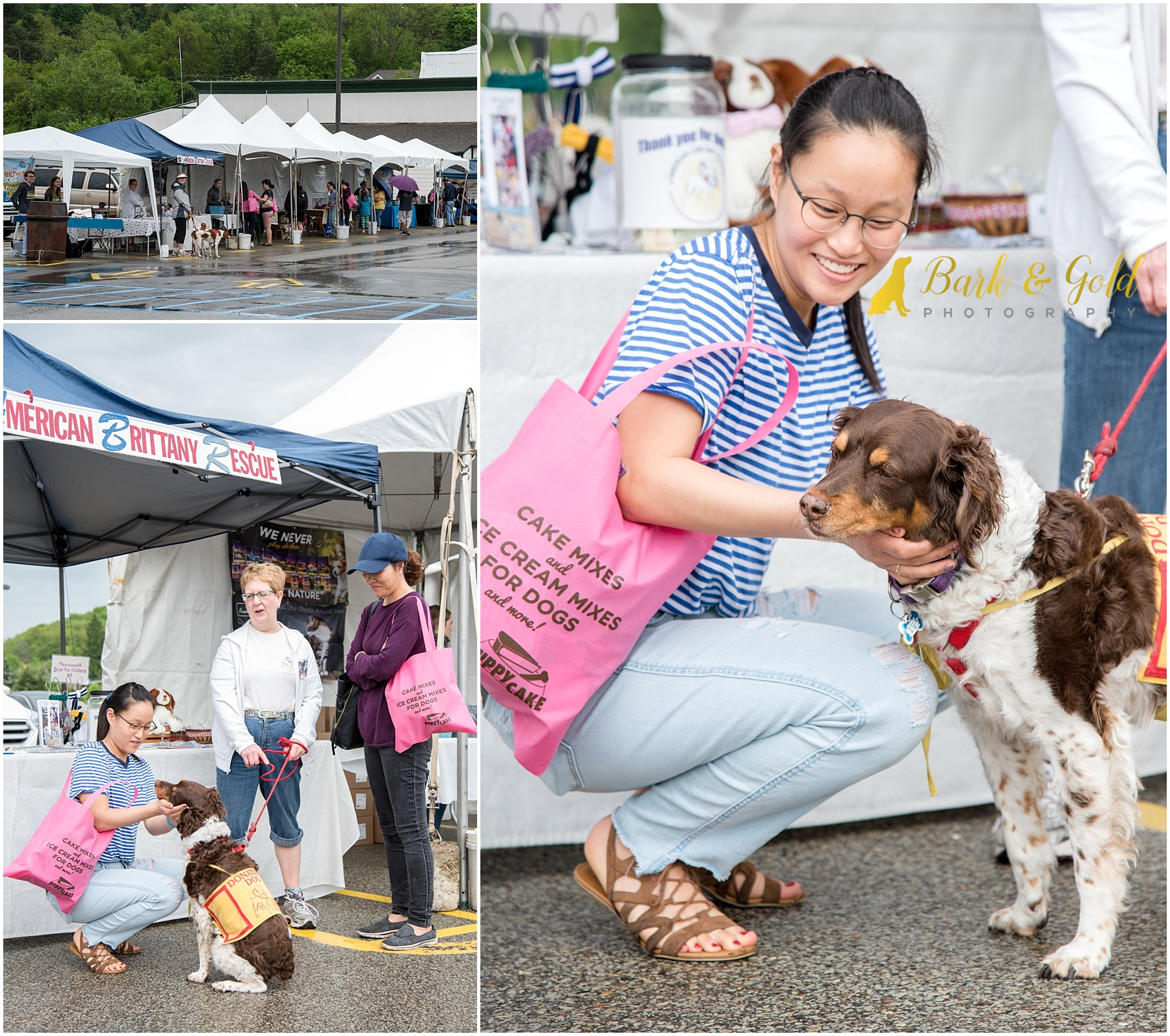 American Brittany Rescue dog greeting customers at Healthy Pet Day 2018