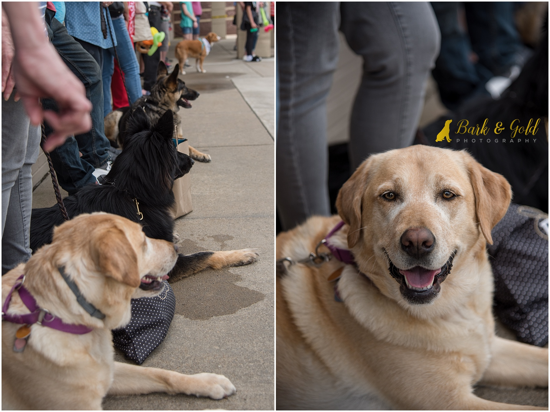 dogs lounging on the sidewalk during Healthy Pet Day 2018