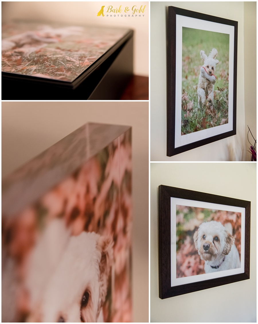acrylic block and framed prints ordered following a pet photography session