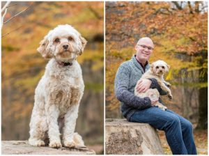 Ruby the Cavapoo - Pittsburgh Dog Photography