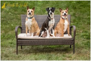 George, Zoe, and Ellie - Pittsburgh Pet Photography