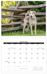 Purchase Your Dreaming of Three Pet Calendars