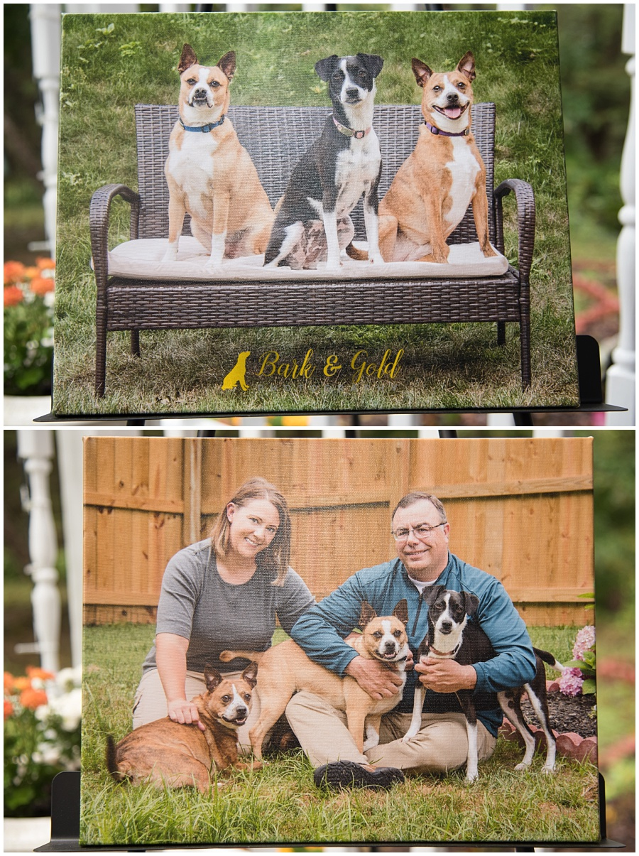 gallery-wrapped canvases from backyard pet photography session near Pittsburgh