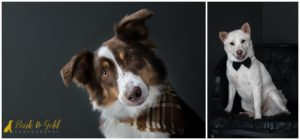 Limited Edition Studio Sessions to Benefit Hello Bully - Pittsburgh Pet Photography