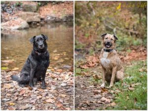 Olive & Coco's Autumn Session at Brady's Run Park - Pittsburgh Dog Photography