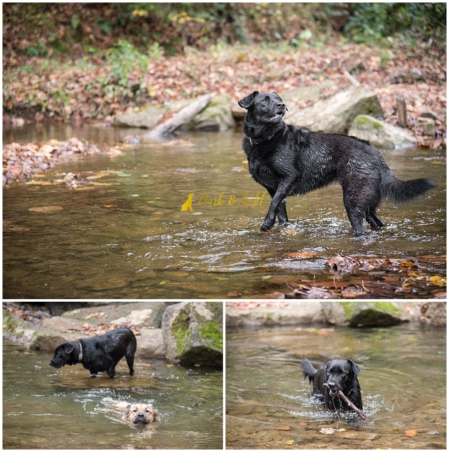 two dogs swimming in a creek at Brady's Run Park in Beaver Falls