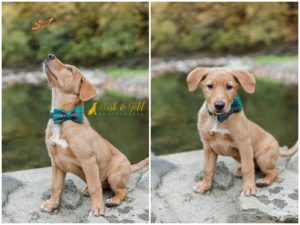 Puppy Love Session: Yoda's Fall Session at Mingo Creek Park - Pittsburgh Puppy Photographer