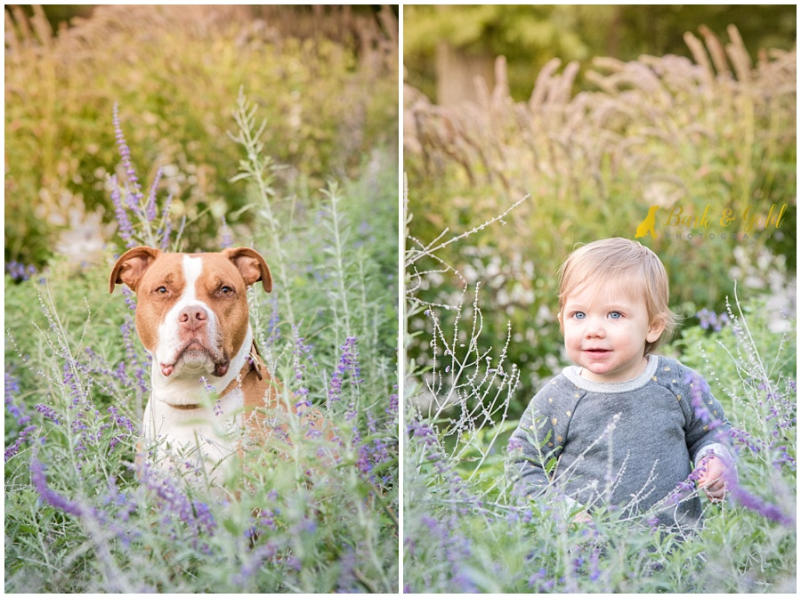 beautiful pit bull among purple flowers at Phipps Conservatory in Pittsburgh