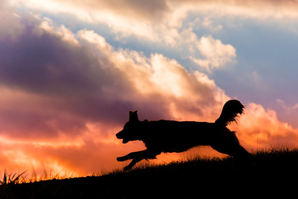 silhouette of golden retriever against a colorful sunset at Mingo Creek Park