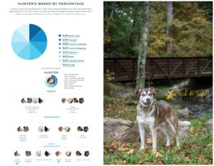 I Tested Our Dog's DNA--And Here's What I Found