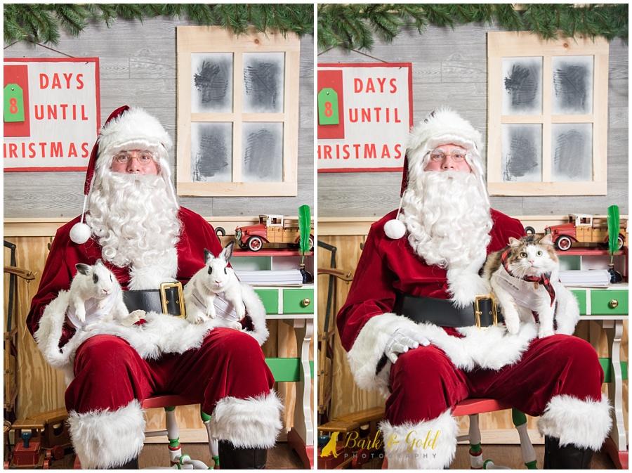 bunnies and cats sitting on Santa's lap at Petagogy Greensburg's pet photos with Santa event