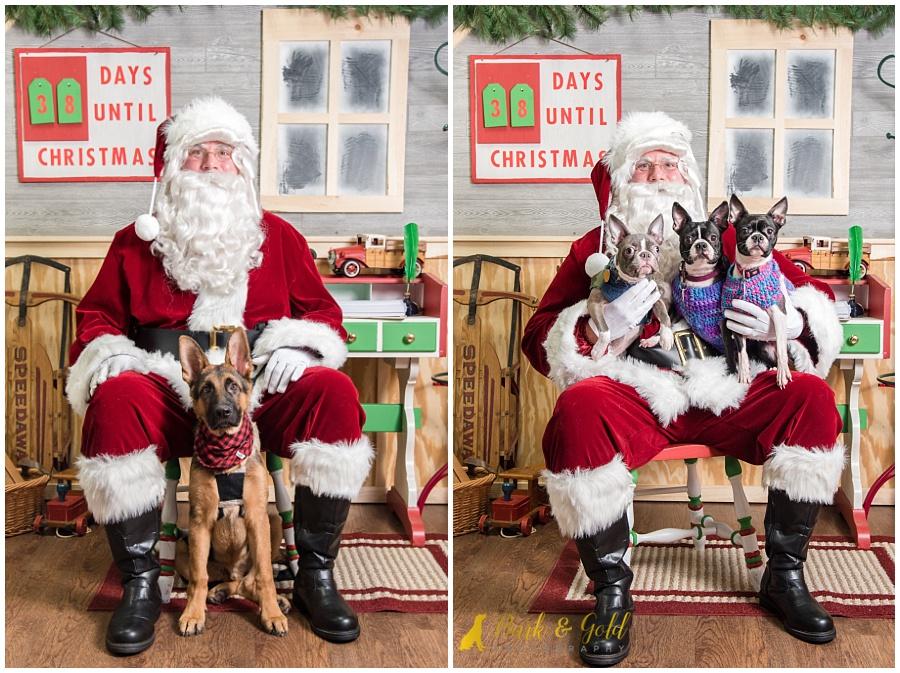 dogs with big ears at Petagogy Greensburg's pet photos with Santa event