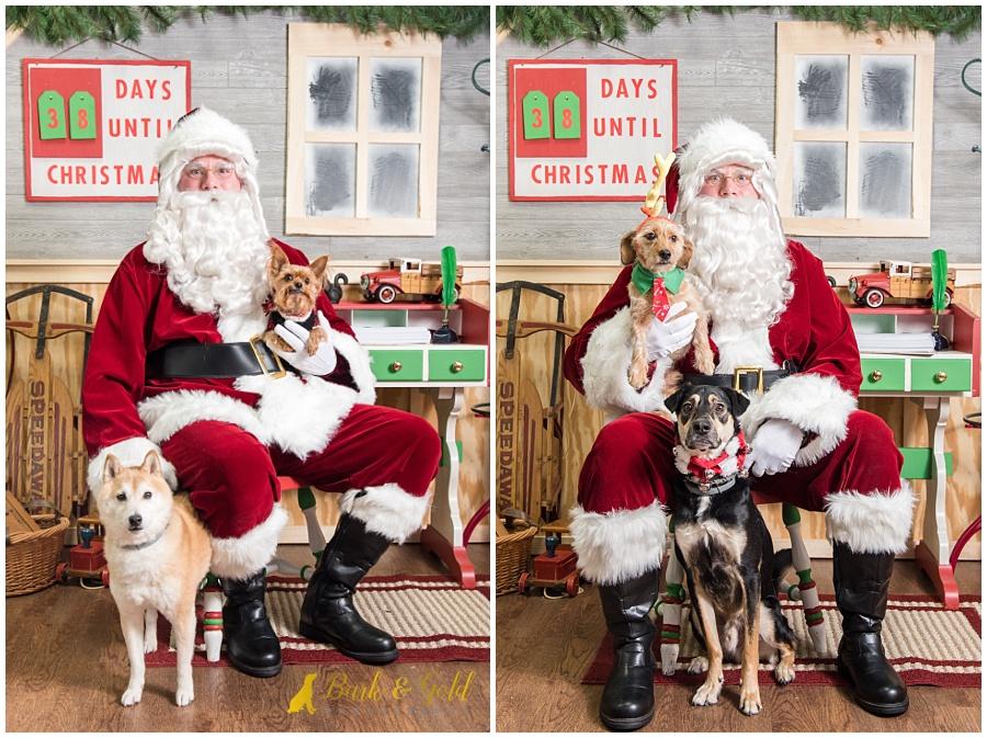 pairs of dogs visiting Santa at Petagogy Greensburg's pet photos with Santa event