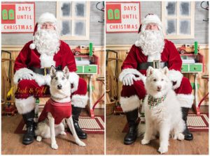 Petagogy Greensburg's Pet Photos with Santa 2018