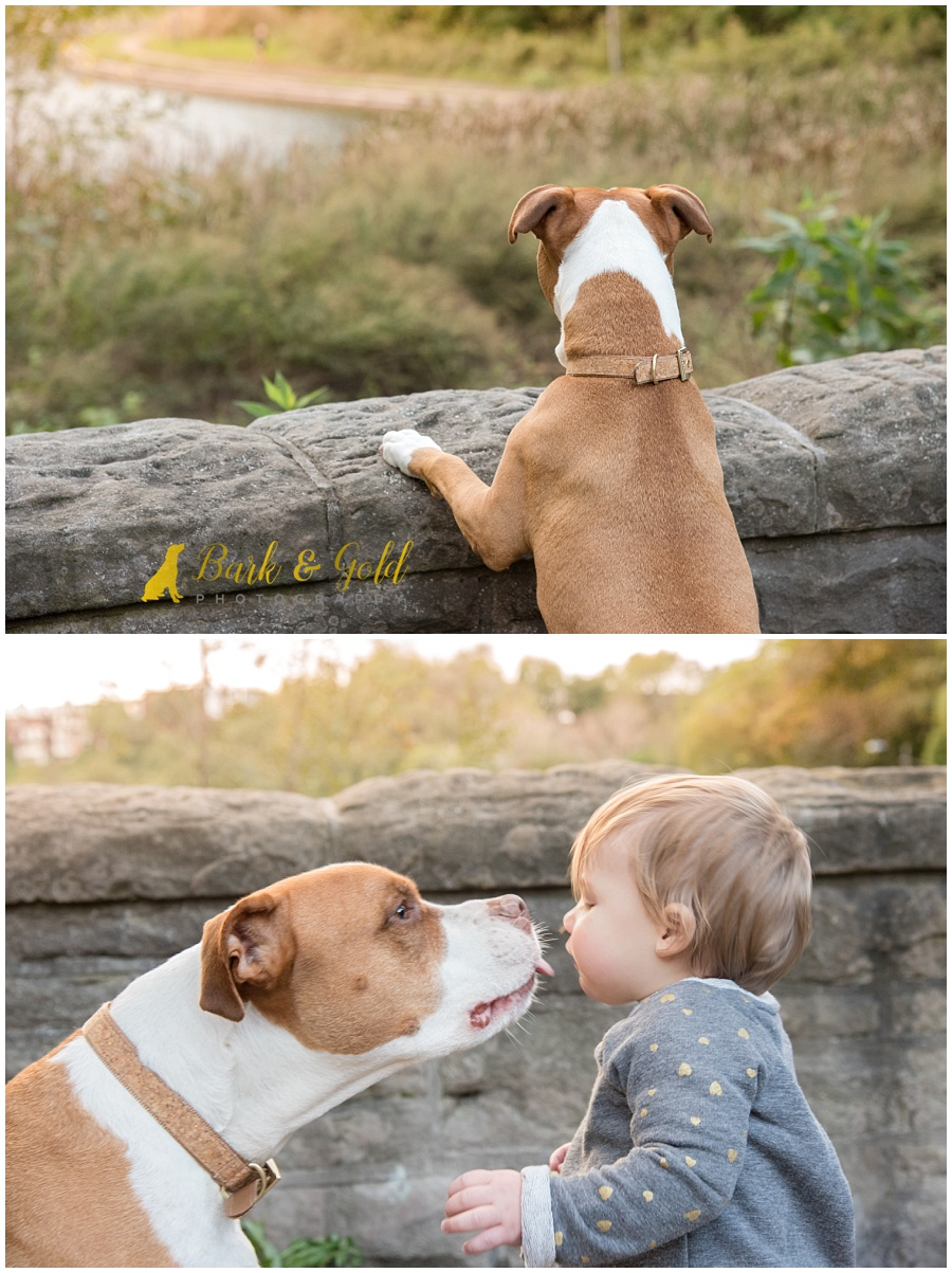 pit bull kissing little girl at Schenley Park in Pittsburgh
