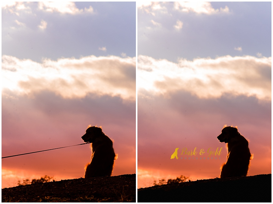 before and after of leash dog during Silhouette Sunset Session at Mingo Creek Park