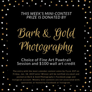 Bark & Gold Photography mini-contest prize announcement