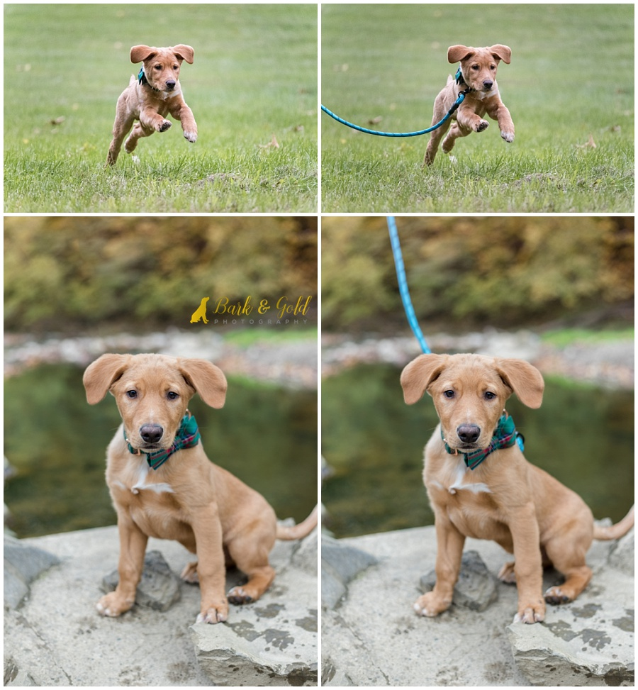 young puppy at Mingo Creek Park before and after a leash removal