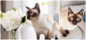 Meesha the Siamese - Pittsburgh Pet Photography